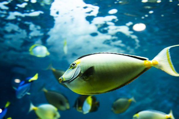 優雅に泳ぐお魚